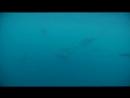 Дельфины на Мальдивах. Райский серф трип. [Surfholidays, серфинг]
