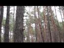 Поход по грибы в Савранский лес)
