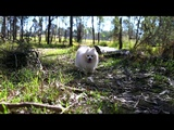 how to capture a wild marshmallow