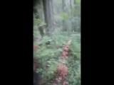 Грибы в лесу.