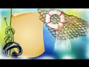 Морские раковины Закажите чудесный видео клип из фотографий для ваших любимых В ярком ролике будут запечатлены все самые незабы