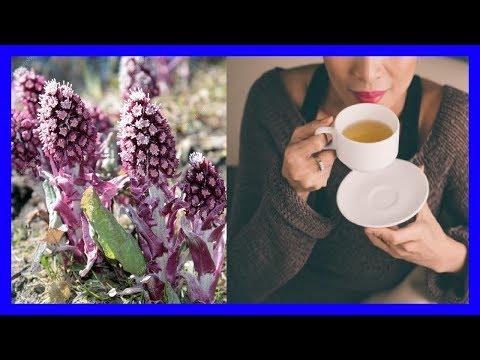 Usos medicinales de la Hierba De Petasita Alivia Las Alergias, Migrañas Y Más