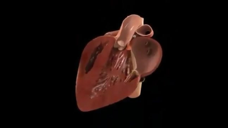 3D модель биения сердца