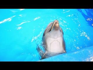 Споем вместе с дельфинами?