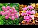 Самые красивые ЦВЕТЫ цветущие осенью