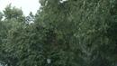 Стихия в Пензе ветер вырвал с корнем деревья и разбросал мороженое по улице