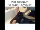 Кот говорит_ Я бык! Я мужик!😂😂😂😂😂