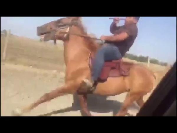 Yorga atlar. Gəncəni Yorga Atlari bir arada.