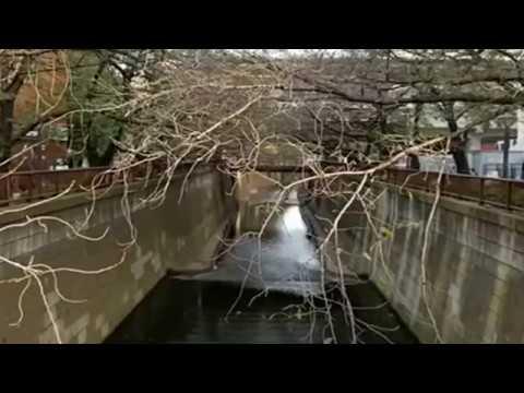 В Японии осенью зацвела сакура