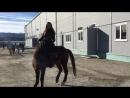 С лошадьми главное взаимопонимание Люблю свою работу 😉 телеведущая ялюблюсвоюработу первыйканал