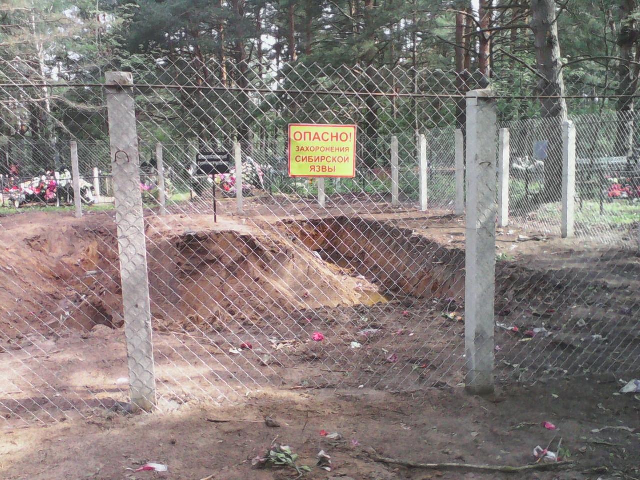 В Кимрах сибирскую язву «похоронили» на… человеческом кладбище