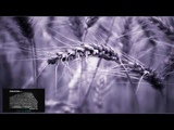 Ferry Corsten &amp Jordan Suckley - Rosetta (Extended Mix)
