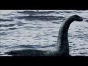 Невероятные свидетельства очевидцев неизвестных животных. Что скрывают морские глубины