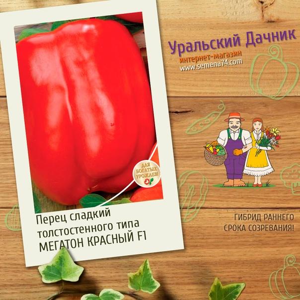 перец мегатон красный f1 гибрид раннего срока созревания. для выращивания в теплицах, парниках, туннелях. растение высокорослое (80-85 см), мощное. плоды гибрида мегатон f1 сразу выделяется на
