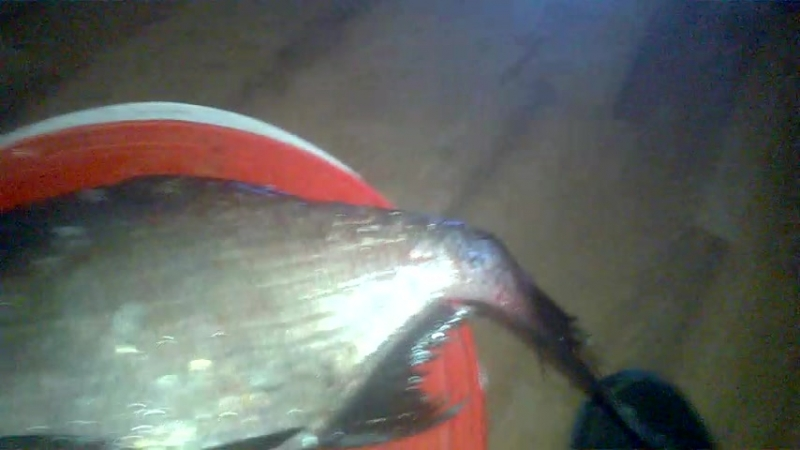 Рыбалка на лошы