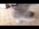 What the fuck kitty