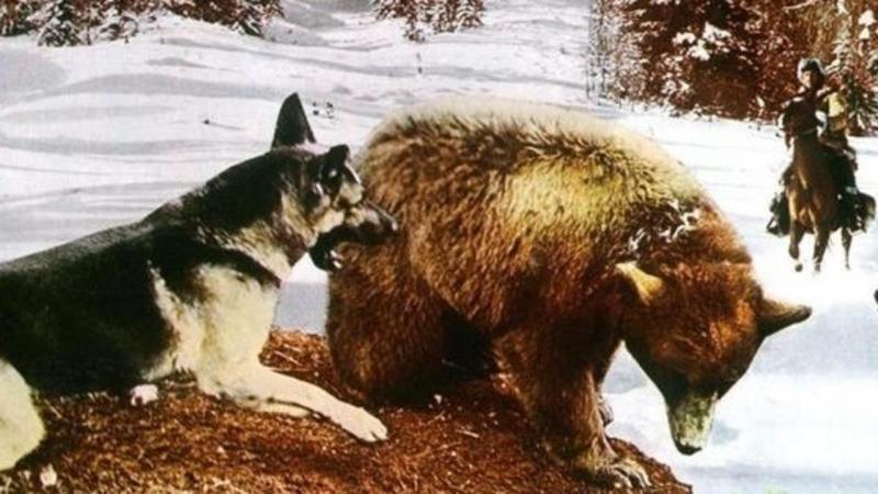 Белый Клык спешит на помощь (1974) (Zanna bianca alla riscossa)