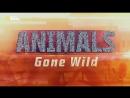 Животные без правил 5 серия. На волосок от гибели / Animals Gone Wild