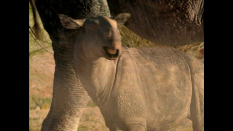 BBC Прогулки с Чудовищами - Земля гигантов (BBC: Walking with Beasts - Land of Giants )(2001)