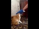 Кот выгнал пацана на балкон СМОТРЕТЬ ДО КОНЦА