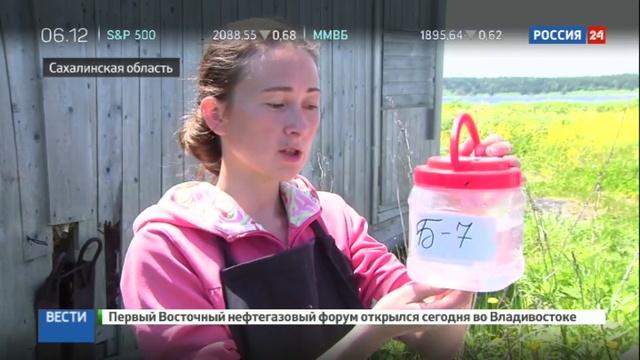 Новости на Россия 24 • Ученые Дальнего Востока начали тяжелую работу по восстановлению популяции морского гребешка