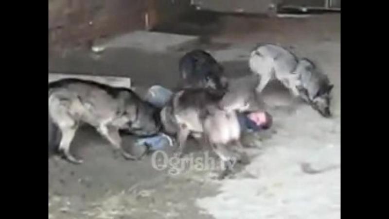 Любвиобильные собакевичи ( без регистрации и смс)