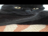 Коты не хотят передавать мне привет