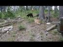 Охотничий кот страшнее зверя нет охота в Крыму