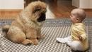 【Забавные видео】 Симпатичная кошка - Самая красивая собака - Самые смешные видео для домашних животных
