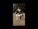 Наша выпускница 🐾 Белый Лекарь Лиакадия Шей Бир Абсолют Раменский Гризли Баскара 8 мес