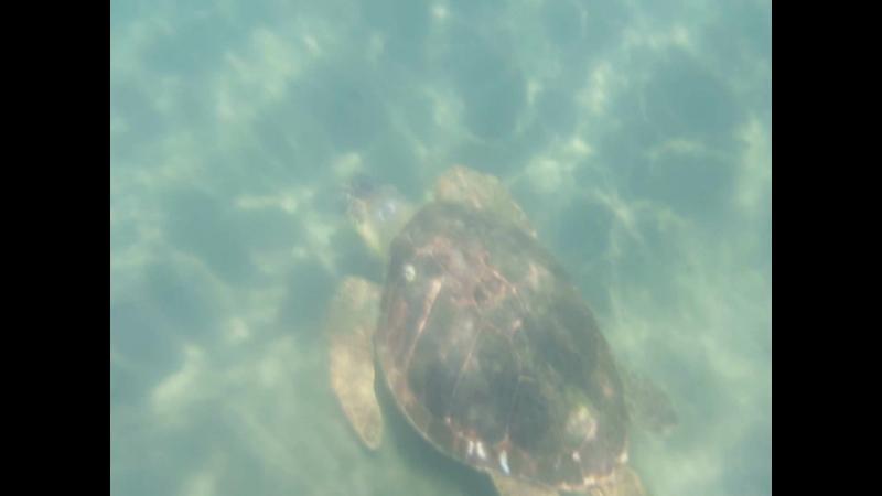 Черепаха » Freewka.com - Смотреть онлайн в хорощем качестве
