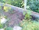 ежики с утра по двору бегают