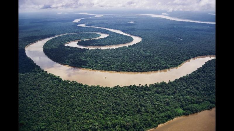 Мир дикой природы ч 1 Дождевые леса Амазонии NatGeoWild