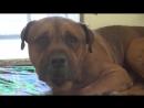 Преданный пес не выдержал и заплакал после того как понял что его, бросили