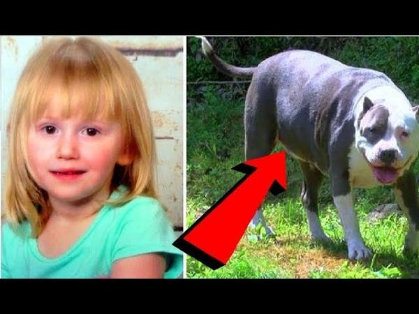 2-х летняя дочка пропала без следа. Спустя трое суток на пороге её дома появился пёс