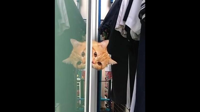Red-headed cat 📽