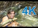 Wildlife in Corcovado National Park, Osa Peninsula, Costa Rica 4K