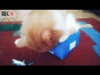 Кот Семён разодрал коробку 😁