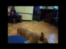 собака друг человека по кличке Марс 720p mp4