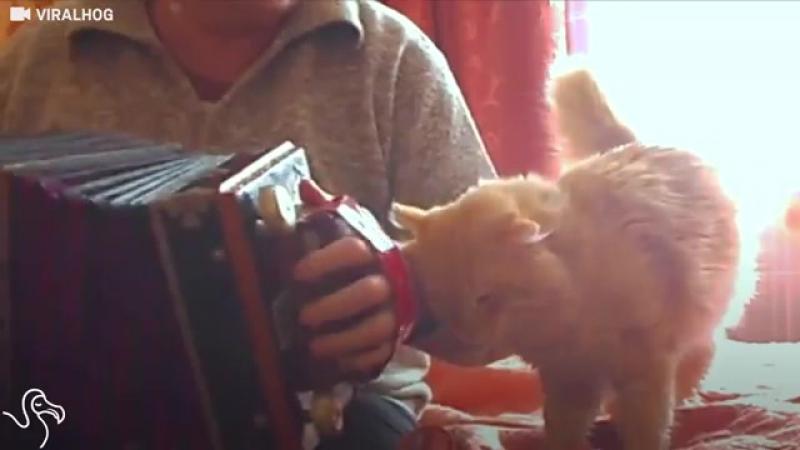 Les animaux aiment la musique ... Cet homme ne joue que pour son chat ♥♥♥