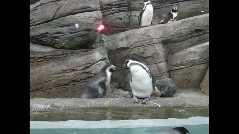 Утро у пингвинов 21 марта