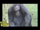 брат фильм 1997 kino remix пародия 2018 ржака юмор прикурить смешные приколы с животными чушкан 2 шимпанзе в кпз фильм брат