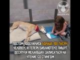 Неожиданная популярность пса-терапевта