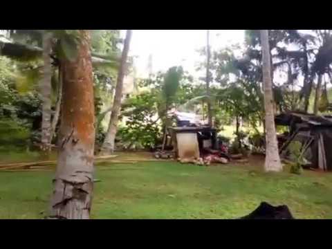 Шри-Ланка охота на Варана 2016 год