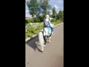 Пони в парке Яхрома 1