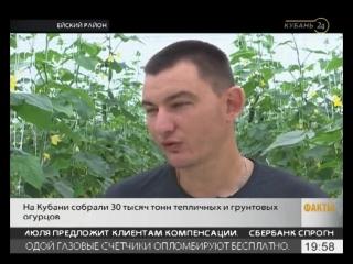 Современные технологии позволили сельхозкооперативу в Ейском районе выращивать овощи в засушливом климате