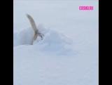 Когда снег по колено