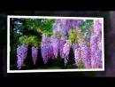Мелодия Н Е Б Е С . Японский саксофон