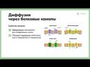 1.5 Физиология как наука. Внутренняя среда организма. Ионная асимметрия Пассивный транспорт. Простая и о