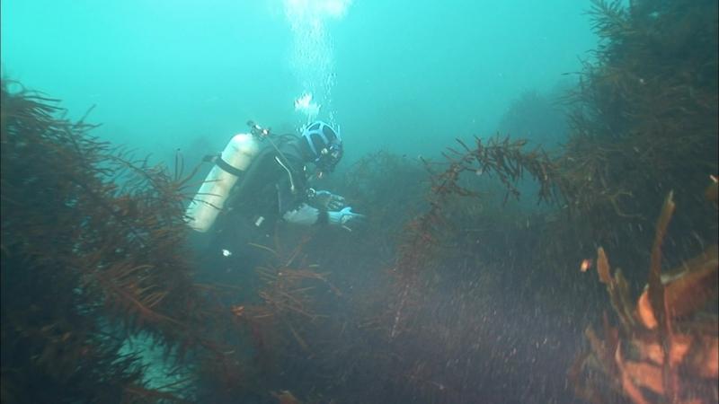 BBC Океаны. Южный океан. 2008. часть 1
